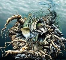ภาพปริศนา : ปลา