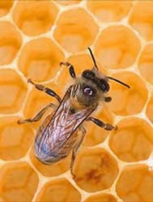 ความสวยที่มาจากน้ำผึ้ง!?