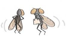 เคล็ดลับ : เทคนิคเด็ดในการไล่แมลงวัน