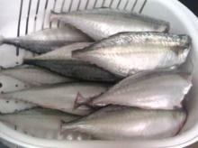 เคล็ดลับล้างและเก็บปลาอย่างถูกวิธี