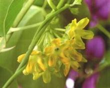 ดอกไม้ไทยกินได้