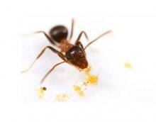 เคล็ดไม่ลับวิธีป้องกันและกำจัดแมลง