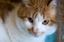ทำไมแมวมีนิสัยขี้ประจบ?