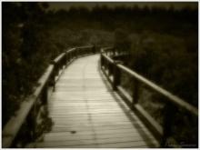 ● สะพานชีวิต ●