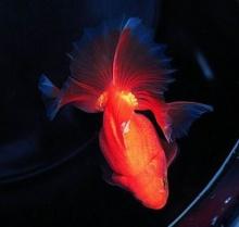 ใครว่าปลาไร้สมอง?