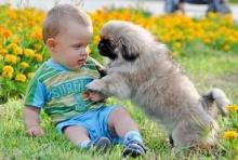 เลี้ยงสุนัขพันธ์ไหนดี..ถ้ามีเด็กในบ้าน