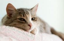 13 เรื่องแมว ๆ ที่คุณอาจไม่(เคย)รู้