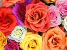ดอกไม้ประจำราศี
