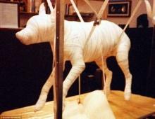 ฮือฮา เทรนด์ใหม่คนรวยทั่วโลก แห่ฮิตแฟชั่นทำศพมัมมี่ให้สัตว์เลี้ยง