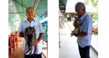 แมวไทยแท้ เหลือเพียง4สายพันธุ์ ปัจจุบันใกล้สูญพันธุ์!!