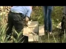 ช็อก รัสเซียพบซากตัวอ่อนมนุษย์กว่า 240 ซาก ทิ้งเกลื่อนในป่า