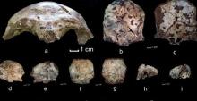 กะโหลกมนุษย์ย้อนอดีต 60,000 ปีชาวอุษาคเนย์