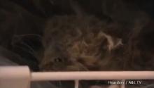 ตะลึง หญิงมะกันเก็บซากแมวในตู้เย็นนับร้อยตัว