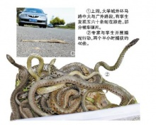 ตื่น! กองทัพงูบุกมหาวิทยาลัยจีน เชื่อเป็นสัญญาณเตือนภัยพิบัติ