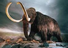 สัตว์สูญพันธุ์ ที่นักวิทย์อยากโคลนนิ่ง