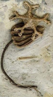 คนร้ายส่งคืนฟอสซิลอายุ300 ล้านปีคล้ายเอเลี่ยนหลังขโมย