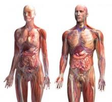 อวัยวะในร่างกายมนุษย์ มีอายุไม่เท่ากัน