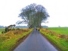 เที่ยว เดอะ ดาร์ก เฮดจ์ แนวไม้แห่งความมืดในไอร์แลนด์เหนือ