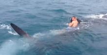 สุดหวาดเสียว!ฝรั่งโดดขี่หลังฉลามวาฬ