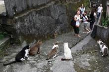 มหัศจรรย์หมู่บ้านแมวหูตง ที่ไต้หวัน