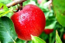 วิธีปอกแอปเปิลไม่ให้ดำ