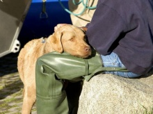 เหตุผลที่รักหมามากกว่ารักคน!
