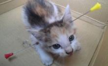 ซุปเปอร์น้องแมว โดนคนใจร้ายยิงลูกดอกทะลุุคอ ยังรอด
