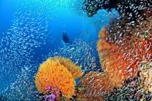 7 จุดดำน้ำดูปะการัง สวรรค์ใต้ทะเลไทยที่ไม่ควรพลาด