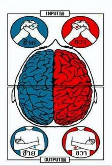 มาเช็คสมองซีกซ้าย ซีกขวาจากการกุมมือ กอดอก