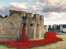 ดอกป๊อปปี้กว่า 800,000 ดอกถูกประดับไว้ที่หอคอยแห่งลอนดอน