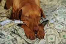 10 อันดับสุนัขที่ค่าตัวแพงหูฉี่!!