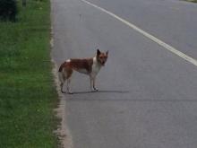 น่าสงสาร! หมาน้อยถูกทิ้งข้างทาง รอความหวังว่าเจ้านายจะมารับ