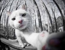 ถ่าย เซลฟี่ สวยแบบสัตว์โลกน่ารัก