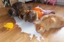รวมภาพถ่ายเด็กๆกับสัตว์เลี้ยง สุดน่ารัก !!