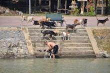 ชาวเน็ตสุดประทับใจ!!! ชม-แชร์ ชายใจดีจับน้องหมาจรจัดอาบน้ำ