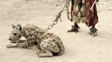 สัตว์เลี้ยงของชาวลากอส ที่ไนจีเรีย แปลกแค่ไหนมาดูกัน!!