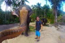 อะเมซิ่งช้างไทย! เซลฟี่ได้ตัวแรกของโลก แถมฝีมือเจ๋งมุมสวย