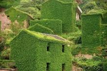 เปิดตำนาน หมู่บ้านสีเขียว ร้างวังเวงกลางเกาะ ธรรมชาติกระชับพื้นที่มนุษย์