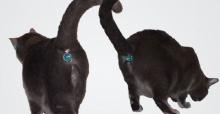 ทาสแมวทั้งหลายต้องดู! แฟชั่นน่ารักๆ จี้กากเพชรคล้องหางน้องเหมียว