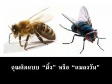 คุณคิดแบบผึ้ง หรือ แมลงวัน