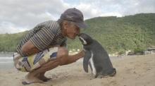 เพนกวิ้นตัวนี้ ว่ายน้ำ เพื่อมาพบกับชายที่เคยช่วยชีวิต