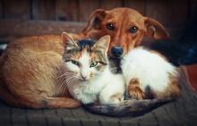 แมวหรือหมา!! ใครรักคุณมากกว่ากัน?