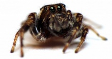 ยาฆ่าแมลงสามารถเปลี่ยนพฤติกรรมของแมงมุมได้