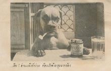 คุณโจโฉ สุนัขทรงเลี้ยงของ ในหลวง ร.9 ที่หลายคนอาจยังไม่เคยรู้...