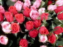.. ดอกไม้  วันวาเลนไทน์  ..