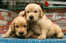 อยากสุขภาพดีควรมีน้องหมาคู่ใจ!!