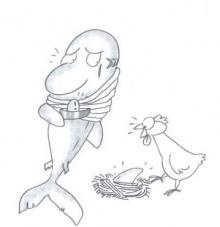 หูฉลาม...คุณค่ายิ่งใหญ่เท่าไข่ฟองเดียว