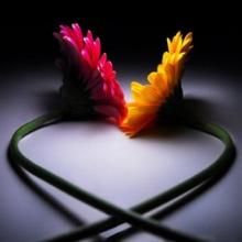 ♣ ความรัก .. ไม่มีวันศึกษาจบในวันเดียว ♣