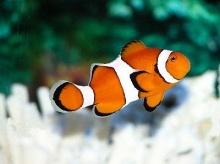 ปลาต้องกินน้ำหรือเปล่า ?