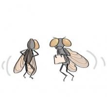 สมองแมลงวันถูกสร้างขึ้นมาพิเศษ หนีพ้นอิทธิฤทธิ์ พลังฝ่ามือ